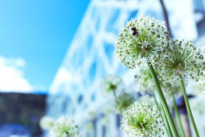 Image of flower and bee in front of Basen