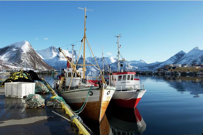 Norsk saltet tørrfisk